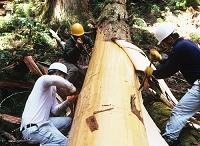 林業 皮むき