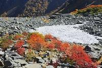 長野県 涸沢カールのテントとナナカマドの紅葉
