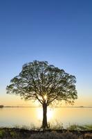 青森県 一本の木