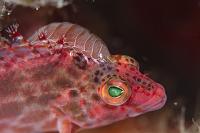 インドネシア コモド諸島 寄生虫が付着した魚