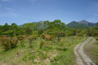 山梨県 清里高原 美し森 高原の登山道と北八ヶ岳