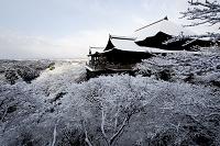 京都府 清水寺 舞台