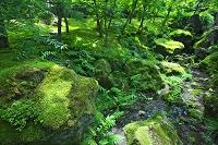 神奈川県 箱根