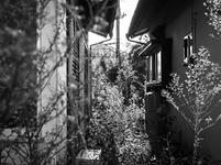 雑草が生い茂るアパートの隙間