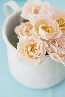 白のブリキにいけたバラ