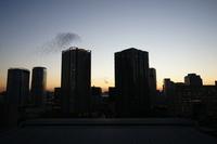 東京 夕暮れ 豊洲