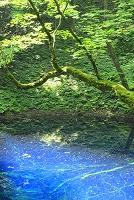 青森県 十二湖 青池