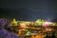 長野県 タカトオコヒガンザクラ咲く高遠城址公園のライトアップ