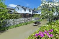 滋賀県 新緑の八幡掘り船めぐり