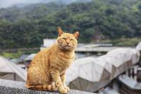 台湾 ネコの駅と言われる猴ドウ駅とネコ