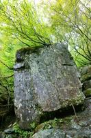 山梨県 巨石の上に生えた木 南アルプス
