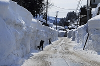新潟県 雪掻き作業をする人達