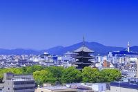 京都府 東寺と京都市街