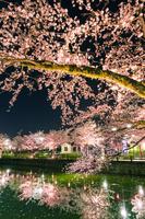 神奈川県 小田原城址公園のお濠とライトアップの桜