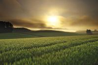 北海道 麦畑と日の出と朝霧