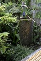 京都府 京都市 手水鉢 芬陀院