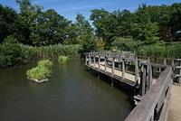 東京 洗足池公園の水生植物園