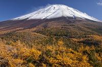 山梨県 富士山奥庭の黄葉