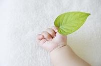 若葉を持つ日本人の赤ちゃんの手