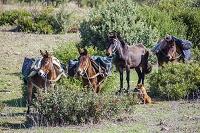 モロッコ ロバと馬と犬