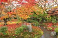 京都府 宝厳院 獅子吼の庭の紅葉