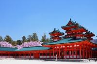紅枝垂桜と青竜楼 (平安神宮) 洛東 京都