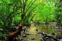 ポンペイ島 ミクロネシア ナンマドール遺跡