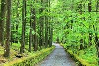 長野県 軽井沢 石畳の道 通称幸福の谷