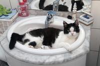 洗面台でくつろぐ猫