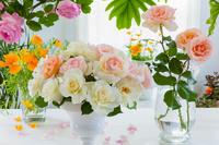 バラの花とエスコルチア