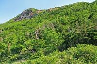 石川県 白山・観光新道から白山