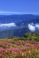 雲上のお花畑の伊吹山