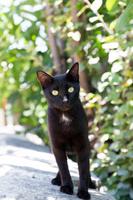 胸元だけ白い黒猫