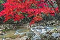 岡山県 紅葉の豪渓と槙谷川