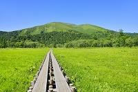 群馬県 上田代から望む至仏山と木道