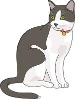 猫 日本猫 白黒