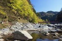 愛知県 萌黄の香嵐渓