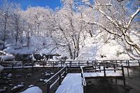 北海道 ふきだし公園と樹氷
