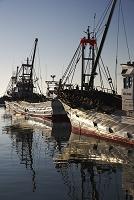 北海道 知来別漁港の朝