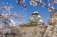 大阪府 桜咲く大阪城