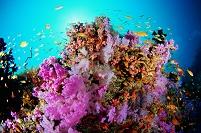 サンゴ礁の海 モルディブ