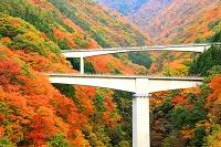 福島県 下郷町 紅葉の谷と高架橋