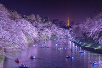 東京都 千鳥ヶ淵の桜ライトアップ