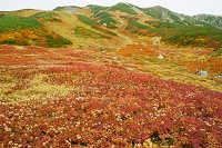富山県 立山室堂雷鳥沢の草紅葉と別山