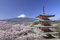 山梨県 新倉山浅間公園の忠霊塔と桜と富士山
