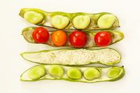 そら豆のさやに収まったそら豆とミニトマトと米