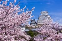 千葉県 日本寺 梅の花と大仏
