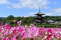 奈良県 法起寺
