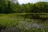 長野県 花咲く乗鞍高原の池