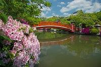京都市 初夏の神泉苑
